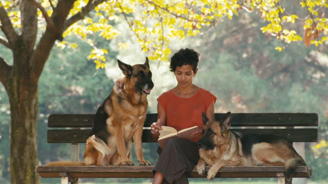 People, pets, dog sitter with german shepherd dogs in park video