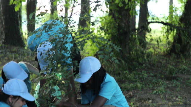 People planting a tree in park Multi-ethnic group of people, cleaning together in public park, saving the environment, planting a tree, disability man helping them. planting stock videos & royalty-free footage