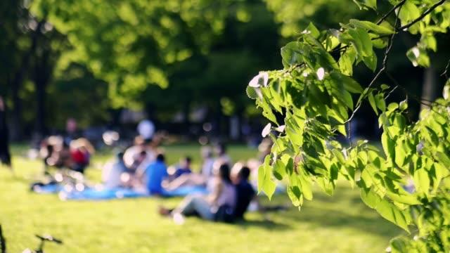 människor som spelar i parken på semester - naturparksområde bildbanksvideor och videomaterial från bakom kulisserna