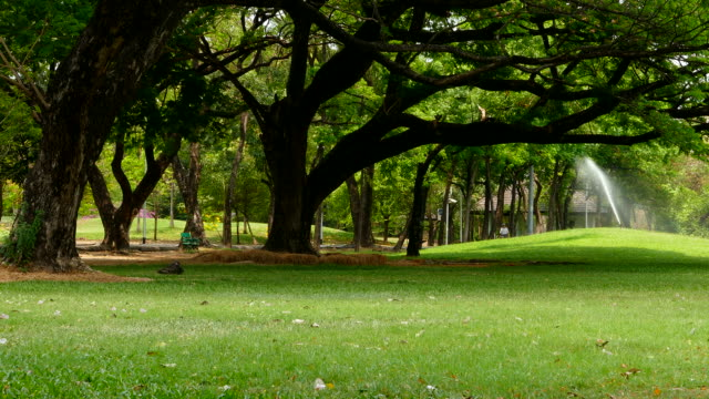 People Relaxing in Green Park video