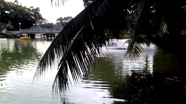 People ride catamarans on the pond in Lumpini park. View on water through palm tree leaves. Bangkok, Thailand video