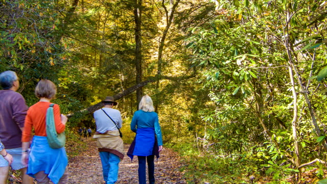 People Strolling on Hiking Path in Blue Ridge Mounains, NC video