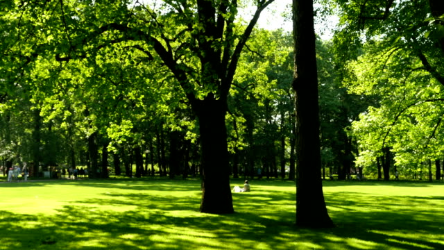 people walk and relax in the shade of a green park - penombra video stock e b–roll