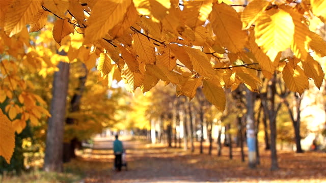 People walk in the park avenue. Autumn, beautiful time. video