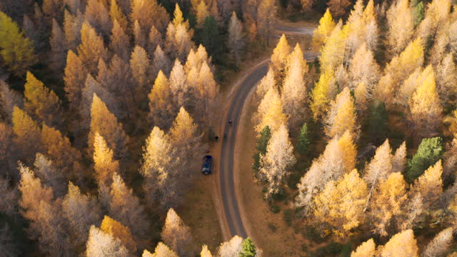 People walking to a car, on a small road in a larch tree forest in the Dolomites video
