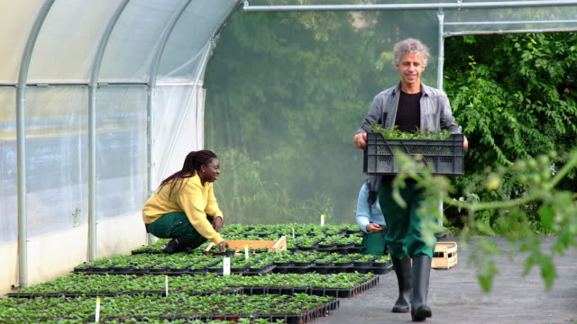 people working in a greenhouse - gardening video stock e b–roll