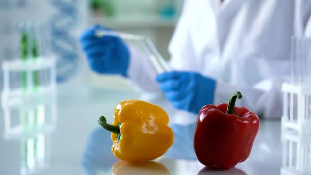 vídeos de stock, filmes e b-roll de pimenta legumes na mesa de laboratório, pesquisador do centro controlo da segurança alimentar - amostra científica