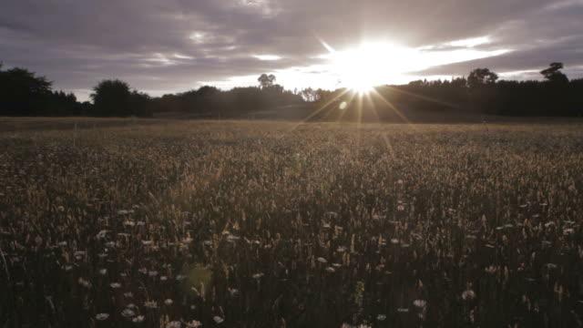 Perfect Sunny Field video