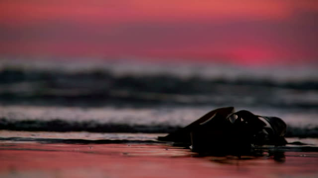 Perfect Sunset Beach With Waves Lapping On To The Sandy Shore video