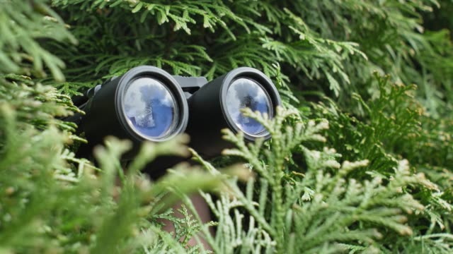 Person Hidden in Bush Peeping with Binoculars and Spying Others