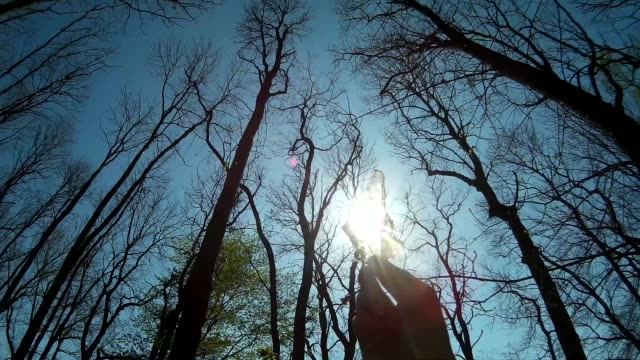 Person holding autumn leaf in front of the sun beam video