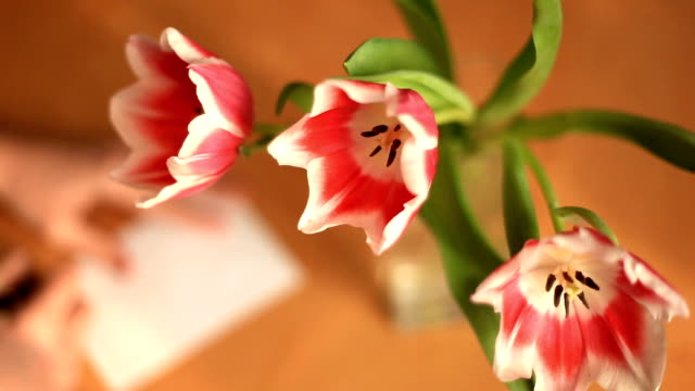 person moves vase with tulips and leaves note video