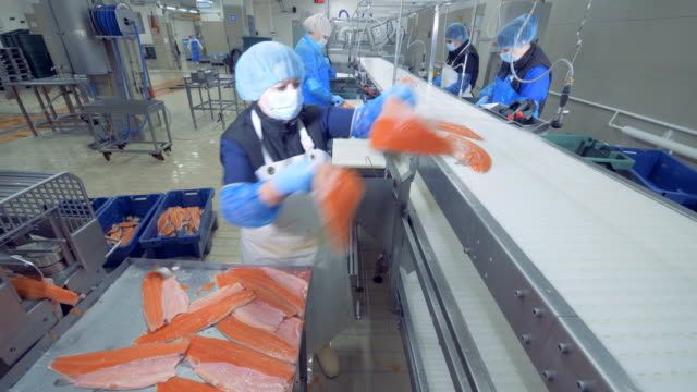 A person places fish fillet on a conveyor, close up. One worker puts fillet on a factory line. fillet stock videos & royalty-free footage