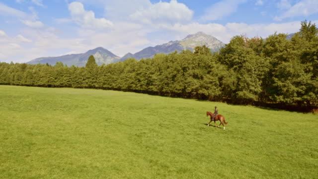 山の草原を横切って馬に乗っている空中人 - 動物に乗る点の映像素材/bロール