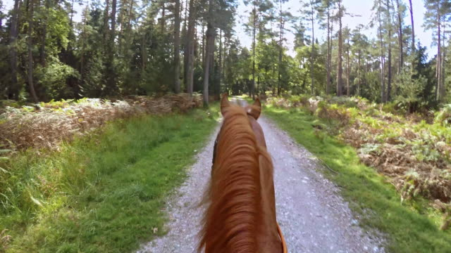 POV Person riding a horse through forest Point of view shot of a person riding a horse through a forest on sunny day. horseback riding stock videos & royalty-free footage