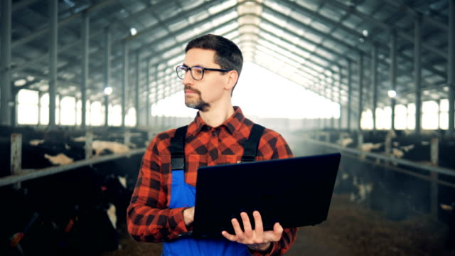 A person with a laptop walks in a cow barn, close up.