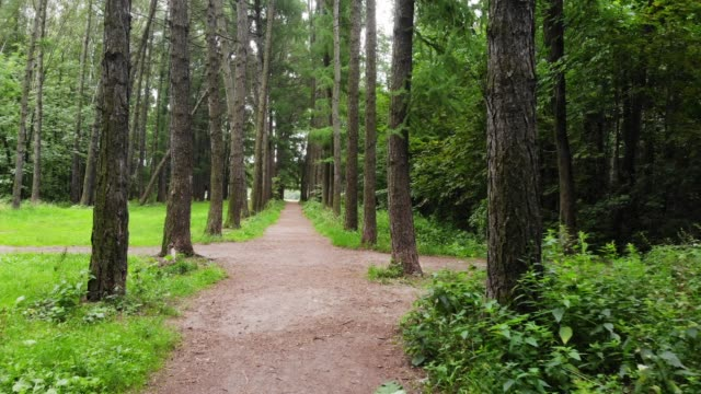 Personal perspective of walking on a path in the forest
