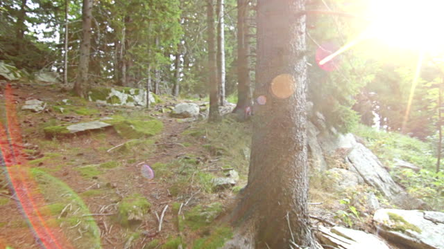vidéos et rushes de perspective personnelle de marche sur sentier dans la forêt de pins - paysage extrême