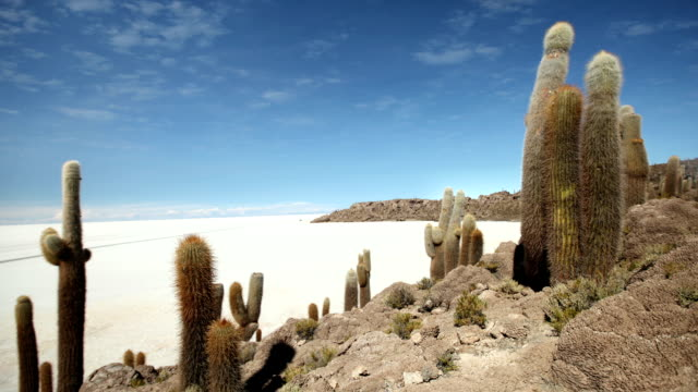 Isla De Pescadores, Bolivia Timelapse of the giant Cactus at Isla De Pescadores in the Uyuni Salt Flats, Bolivia salt flat stock videos & royalty-free footage