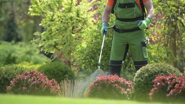 pesticide garden plants spraying with professional equipment - insetticida video stock e b–roll