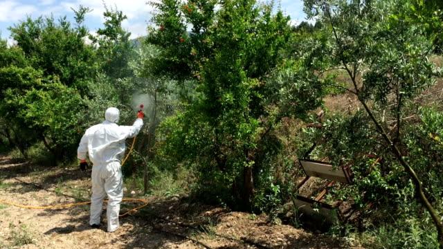 pesticidi di uliveti - insetticida video stock e b–roll