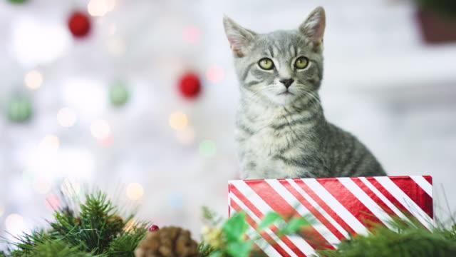Pet Adoption for Christmas