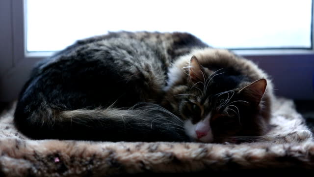 pet cat sleeping on the windowsill and opens his eyes