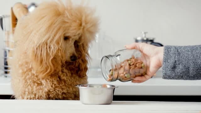 vídeos de stock e filmes b-roll de pet food falls into the bowl for feeding. - dog food
