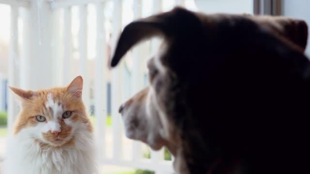 stockvideo's en b-roll-footage met huisdier vrienden zeggen hallo door de voordeur van huis - raam bezoek