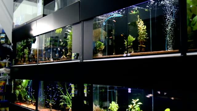 evde beslenen hayvan dükkan akvaryum tam - akvaryum stok videoları ve detay görüntü çekimi