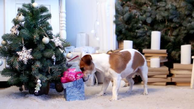 Pet surprise Xmas present video