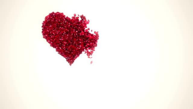 Pétales coeur forme baisse fond blanc - Vidéo