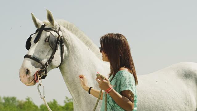 peting cavallo - stallone video stock e b–roll