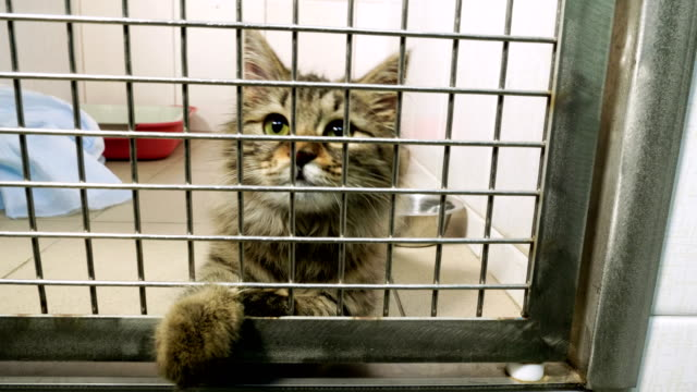 Pets. Close-up shot of cat playing in a cage of animal hospital. 4K