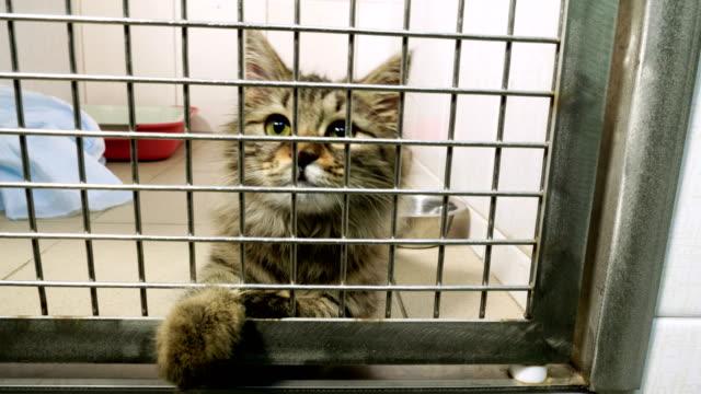 evcil hayvan. hayvan hastanesinin kafesinde oynayan kedinin yakın çekim fotoğrafı. 4k - kafes sınırlı alan stok videoları ve detay görüntü çekimi