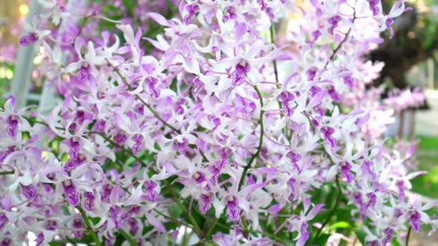 Phalaenopsis orchids flowers bloom in spring
