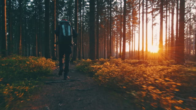 photographer hiker in silent forest in spring with beautiful bright sun rays - trekking video stock e b–roll