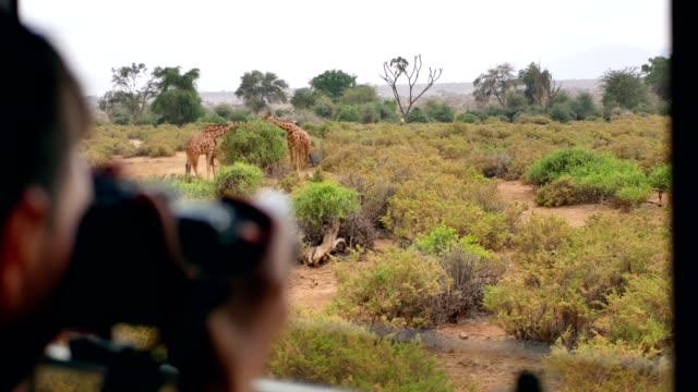 vídeos de stock e filmes b-roll de photographer on safari in africa takes pictures of a wild giraffe out of the car - quénia