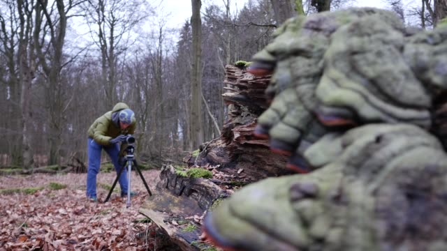 Photographer prepares shot of rotten log in woods video