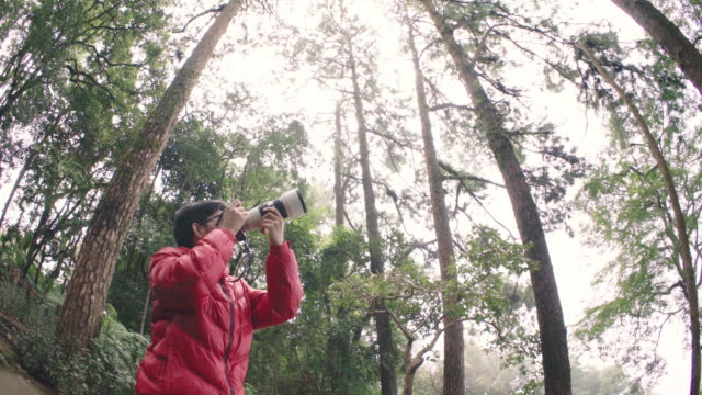 WS Photographer using mirrorless camera with telephoto lens taking photo in pine tree forest video