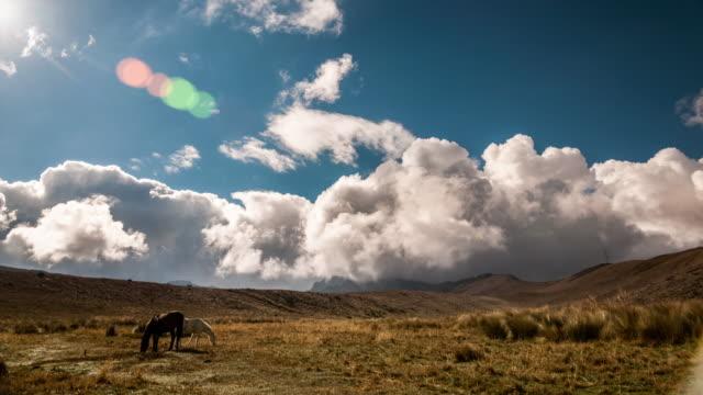 pichincha valley en quito, ecuador, con caballos timelapse - vídeo