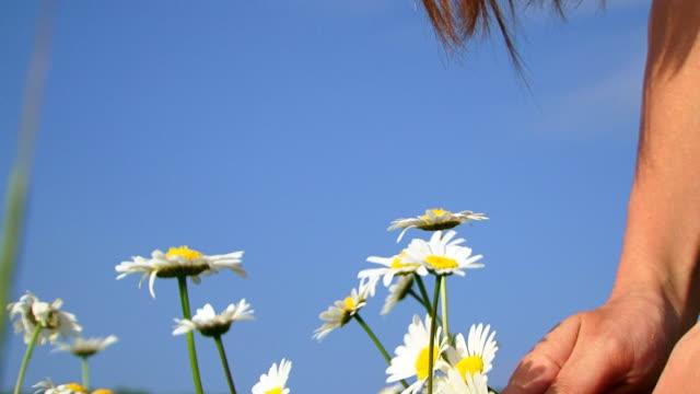 Picking daisies video