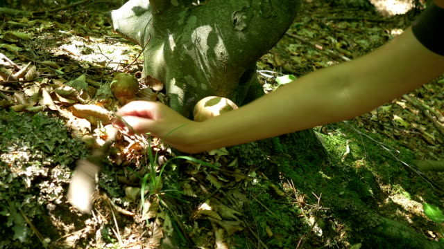 Picking Mushrooms in the Woods video