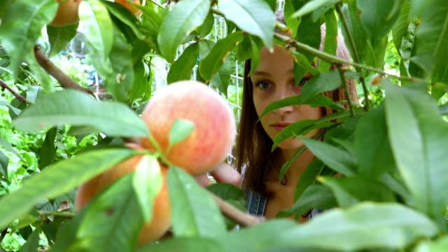 zbieranie brzoskwiń -młoda kobieta i brzoskwinie - brzoskwinia drzewo owocowe filmów i materiałów b-roll