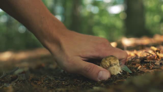 plocka svamp i skogen - höst plocka svamp bildbanksvideor och videomaterial från bakom kulisserna