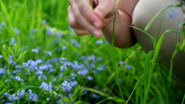 pflücken wildblumen - pflücken stock-videos und b-roll-filmmaterial