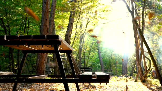 Picnic bench in autumn