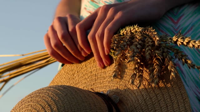 Picture closeup of two hands holding golden wheat spikes and straw hat on field. Rustic outdoor scene in golden tones video