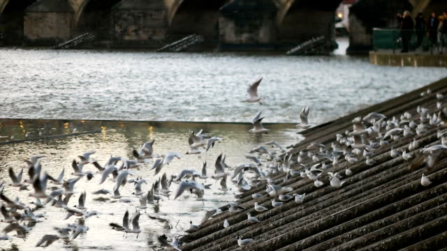 Pidgeons Flying in the City video