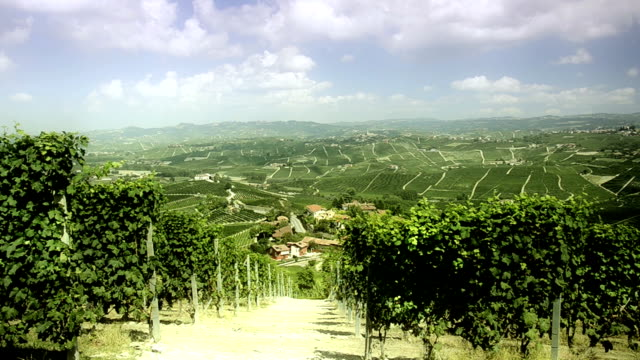 vigneti langhe, piemonte, - langhe video stock e b–roll